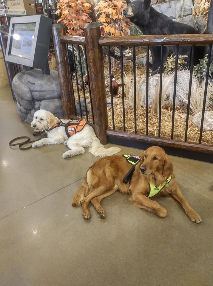 Courageous Companions -Owner-Trainer Service Dog Program